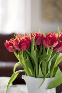 kompozycja tulipanow